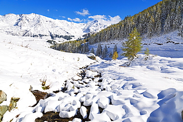 Aerial view of larches and mountains covered with snow in autumn, Vamlera, Spluga Valley, Valtellina, Lombardy, Italy, Europe