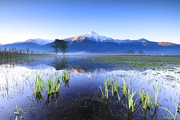 The snowy peak of Mount Legnone reflected in the flooded land at dawn, Pian di Spagna, Valtellina, Lombardy, Italy, Europe