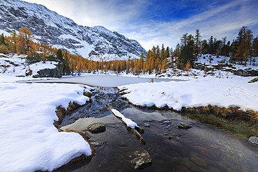 Frozen Lake Mufule framed by larches and snow in autumn, Malenco Valley, Province of Sondrio, Valtellina, Lombardy, Italy, Europe