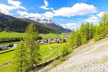 Alpine village of S-chanf surrounded by green meadows in spring, Canton of Graubunden, Maloja Region, Switzerland, Europe