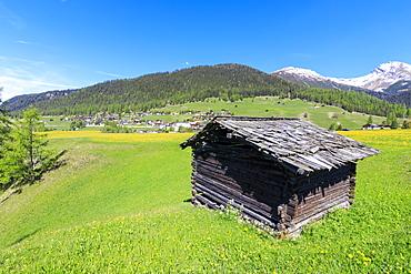 Alpine hut in the green meadows, Davos Wiesen, Canton of Graubunden, Prettigovia Davos Region, Switzerland, Europe