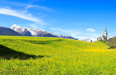 Panoramic of valley covered with yellow flowers, Schmitten, District of Albula, Canton of Graubunden, Switzerland, Europe