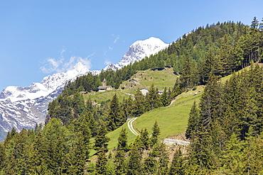Green forest and snowy mountains, San Romerio Alp, Brusio, Canton of Graubunden, Poschiavo Valley, Switzerland, Europe