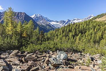 Monte Disgrazia seen from Valle di Chiareggio, Malenco Valley, province of Sondrio, Valtellina, Lombardy, Italy, Europe