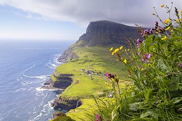 Wild flowers on top of rocks, Gasadalur, Vagar Island, Faroe Islands, Denmark, Europe