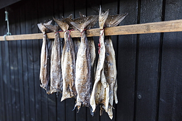 Dried stockfish, Giogv, Eysturoy Island, Faroe Islands, Denmark, Europe