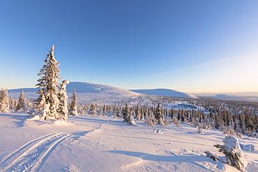 Sun on the snowy woods, Pallas-Yllastunturi National Park, Muonio, Lapland, Finland, Europe