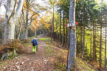 Hiker in the woods during autumn, Piani Resinelli, Valsassina, Lecco province, Lombardy, Italy, Europe
