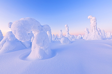 Shapes of frozen trees, Riisitunturi National Park, Posio, Lapland, Finland, Europe