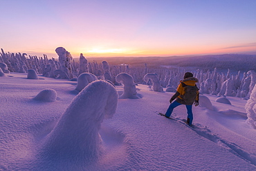 Hiker in the snowy forest at dusk, Riisitunturi National Park, Posio, Lapland, Finland, Europe