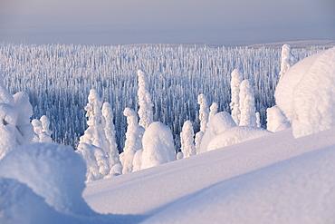Frozen forest, Riisitunturi National Park, Posio, Lapland, Finland, Europe