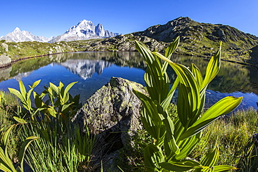 Aiguille Verte from Lac des Cheserys, Haute Savoie, French Alps, France, Europe
