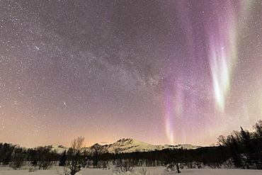 Northern Lights (Aurora borealis), Skoddebergvatnet, Grovfjord, Troms county, Lofoten Islands, Nordland, Norway, Europe
