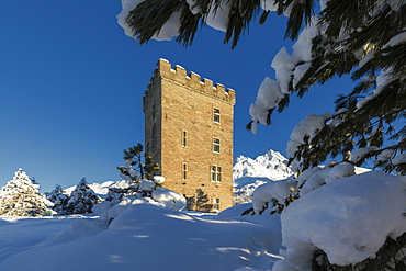 Snow covered trees around Belvedere Tower, Maloja Pass, Bregaglia Valley, Engadine, Canton of Graubunden, Switzerland, Europe