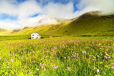 Farmhouse in fields of grass and wild flowers, Gasadalur, Vagar island, Faroe Islands, Denmark, Europe