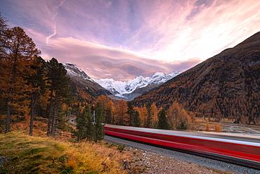Bernina Express train and colorful woods in autumn, Morteratsch, Engadine, canton of Graubunden, Switzerland, Europe