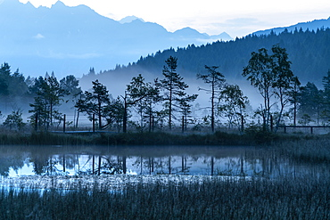 Dusk over trees mirrored in the swamp of Pian di Gembro Nature Reserve, Aprica, Sondrio province, Valtellina, Lombardy, Italy, Europe