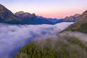 Foggy sunrise over woods of Maloja Pass at dawn, aerial view by drone, Engadine, Canton of Graubunden, Switzerland, Europe