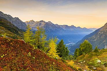 Autumnal colors lit by sunrise, Maloja Pass, Val Bregaglia, Engadine, Canton of Graubunden, Switzerland, Europe
