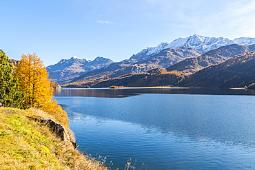 Autumn colors surrounding the clear Lake Sils, Maloja, Upper Engadine, canton of Graubunden, Switzerland, Europe