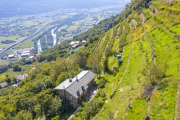 Farms on hills of terraced vineyards, Costiera dei Cech, Valtellina, Sondrio province, Lombardy, Italy, Europe