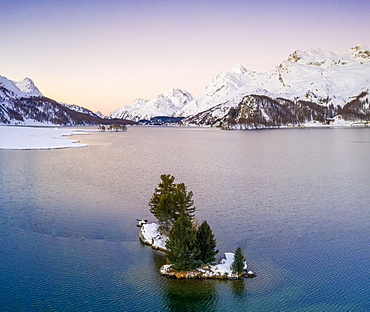 Lone trees in the middle of Lake Sils framed by snow capped mountains at dawn, Engadine, canton of Graubunden, Switzerland, Europe