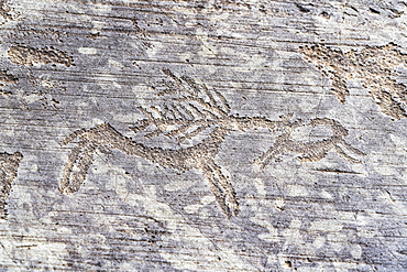 Detail of deer, rock engraving, Naquane National Park, Capo di Ponte, Valcamonica (Val Camonica), Brescia province, Lombardy, Italy, Europe