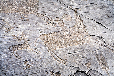 Rupestrian engravings depicting knight hunting a deer, Naquane National Park, Capo di Ponte, Valcamonica (Val Camonica), Brescia province, Lombardy, Italy, Europe