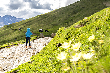 Cute male child with hiking poles walking on trail around the Sassolungo group, Dolomites, Trentino-Alto Adige, Italy, Europe