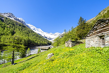 Stone huts in green meadows of Alpe Laresin with Monte Disgrazia on background, Chiareggio Valley, Valmalenco, Lombardy, Italy, Europe