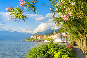Bellagio and mountains seen from lakefront full fill of flowering plants, Lake Como, Como province, Lombardy, Italy