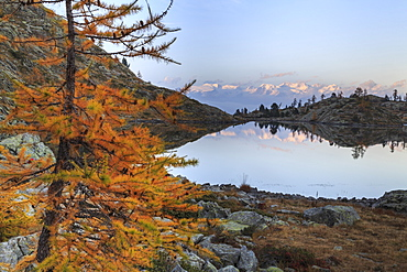 Sunrise on Mount Rosa seen from Lac Blanc, Natural Park of Mont Avic, Aosta Valley, Graian Alps, Italy, Europe
