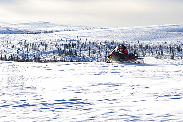 Man taking a ride on snowmobile in the snowy landscape of Saariselka, Inari, Lapland, Finland, Europe
