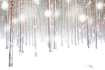 White snowflakes falling on frozen tree trunks in the arctic forest, Lapland, Finland