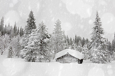 Snowflakes falling on traditional wood hut in the snow capped forest, Lapland, Finland