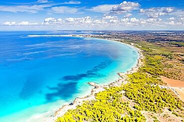 Punta della Suina sand beach framed by Mediterranean pine trees, aerial view, Gallipoli, Lecce province, Salento, Apulia, Italy, Europe