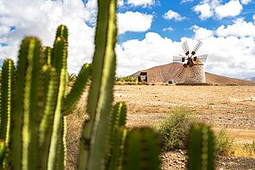 Stone traditional windmill framed by cactus, Tefia, Fuerteventura, Canary Islands, Spain, Atlantic, Europe