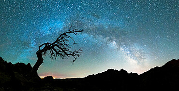 Bare tree under the Milky Way arch in the starry sky over Pico Ruivo mountain, Madeira, Portugal, Atlantic, Europe