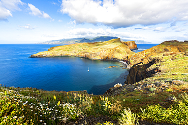 Flowering plants with Ponta de Sao Lourenco cliffs and bay on background, Atlantic Ocean, Canical, Madeira, Portugal