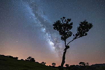Lone tree under the bright Milky Way at night, forest of Fanal, Madeira island, Portugal