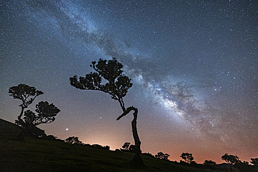 Milky Way on tree silhouettes in Fanal forest, Madeira island, Portugal