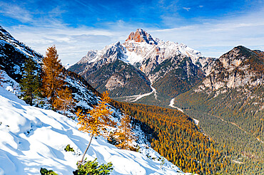 Croda Rossa d'Ampezzo mountain surrounded by larch tree forest in autumn, Dolomites, Belluno province, Veneto, Italy