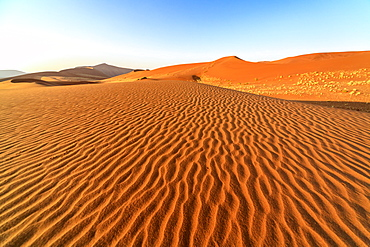 Dried plants among the sand dunes shaped by wind, Deadvlei, Sossusvlei, Namib Desert, Namib Naukluft National Park, Namibia, Africa