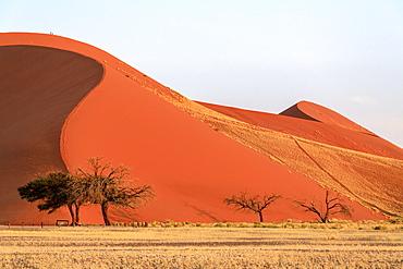 Dune 45 the star dune composed of 5 million year old sand, Sossusvlei, Namib Desert, Namib Naukluft National Park, Namibia, Africa