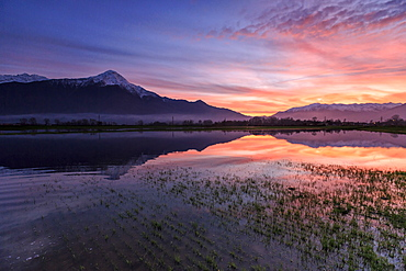 Natural reserve of Pian di Spagna flooded with Mount Legnone reflected in the water at sunset, Valtellina, Lombardy, Italy, Europe