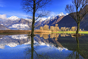 The natural reserve of Pian di Spagna flooded with snowy peaks reflected in the water, Valtellina, Lombardy, Italy, Europe