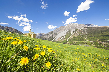 Yellow flowers and green meadows frame the church of Oga, Bormio, Stelvio National Park, Upper Valtellina, Lombardy, Italy, Europe