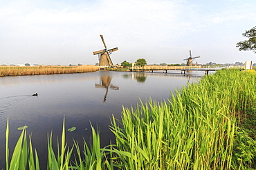 Green grass frames the windmills reflected in the canal, Kinderdijk, Rotterdam, South Holland, Netherlands, Europe