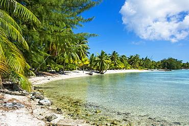 Beautiful palm fringed white sand beach in the turquoise waters of Tikehau, Tuamotus, French Polynesia, Pacific