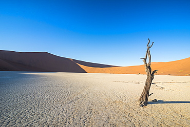 Deadvlei, an old dry lake in the Namib desert, Namibia, Africa